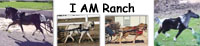 I AM Ranch