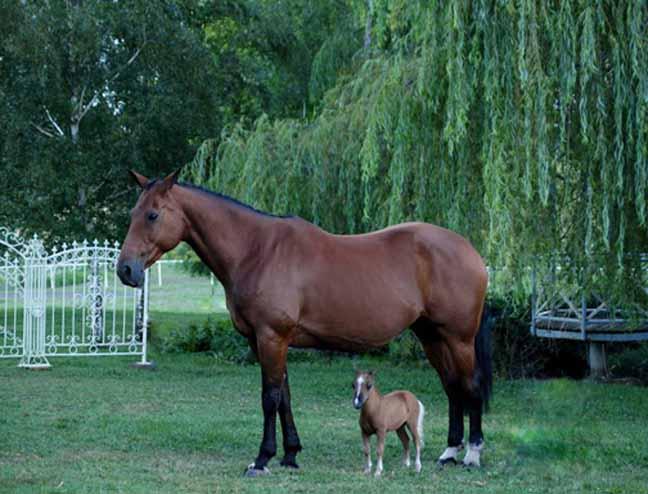 Mini Ponei Mini Horse Mini Horse Animais De Boa Qualidade ...
